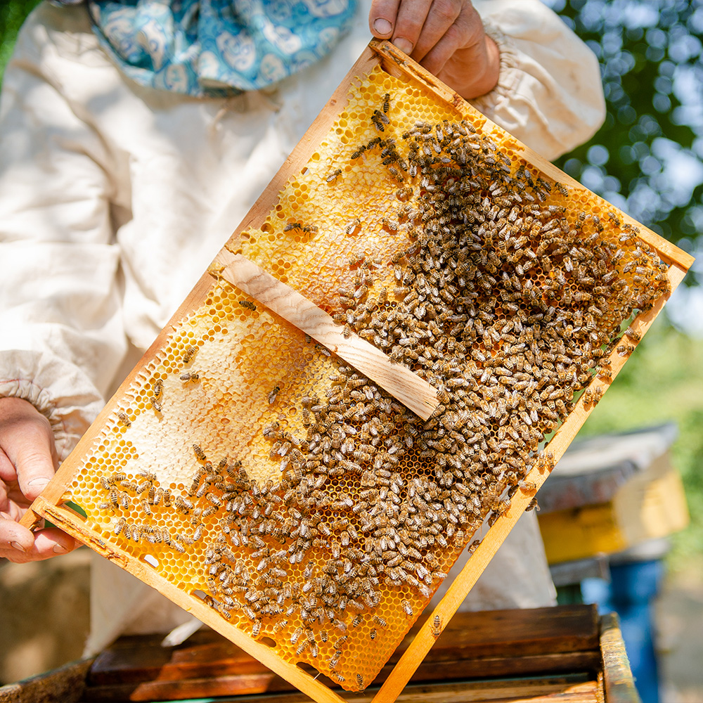 Μέλι Ιβήρων